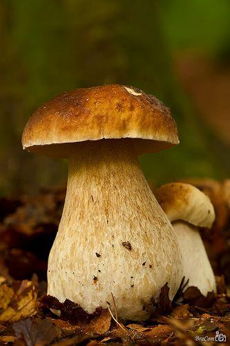 benchbags_food_autumn_mushroom