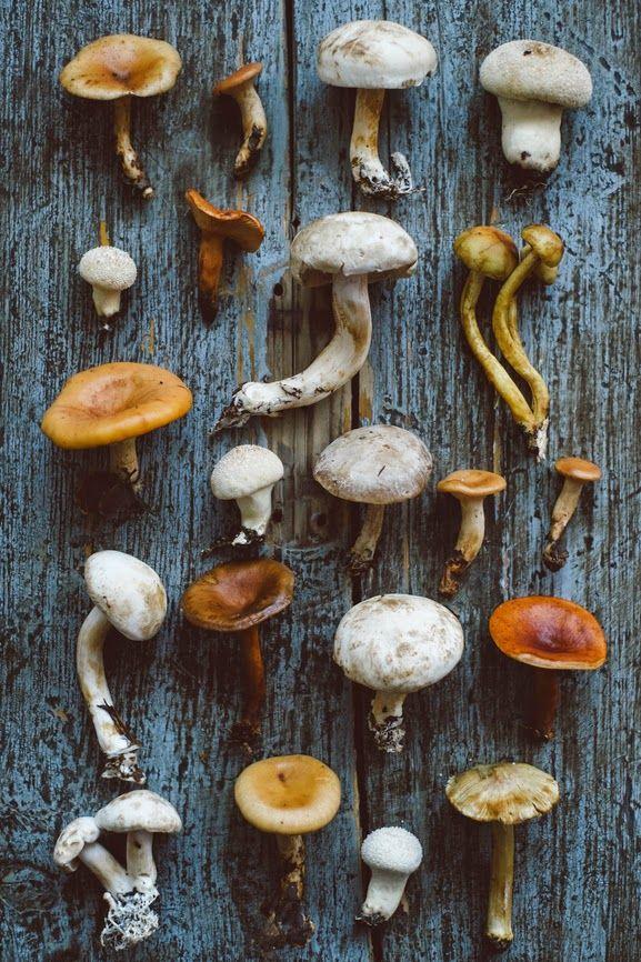 benchbags_food_autumn_mushroom2