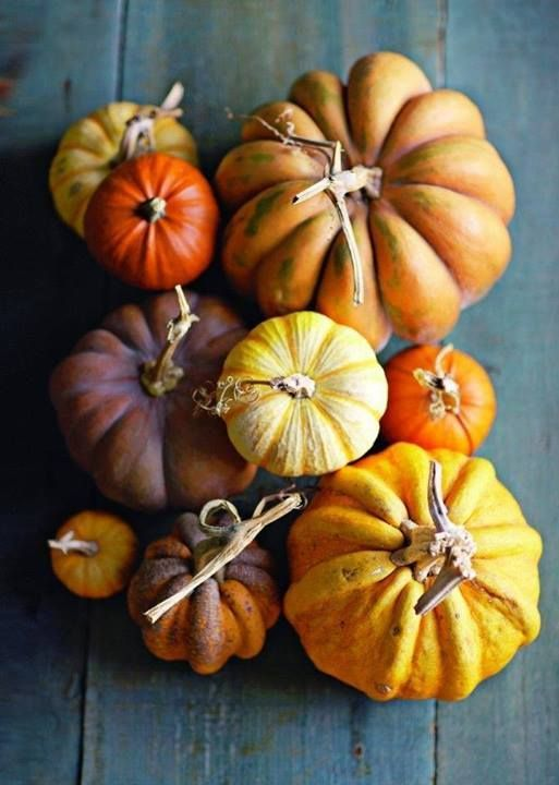 benchbags_food_autumn_pumpkin0
